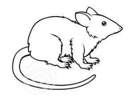 восточный гороскоп 2017 крыса