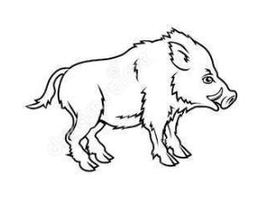 свинья кабан восточный гороскоп 2017