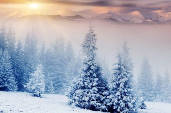 январь прогноз предсказание
