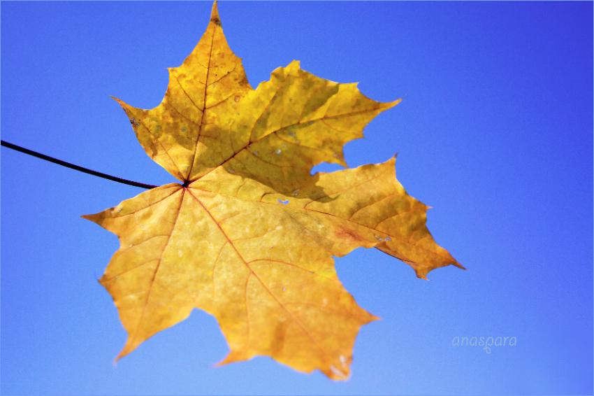 прогноз на сентябрь энергии осени