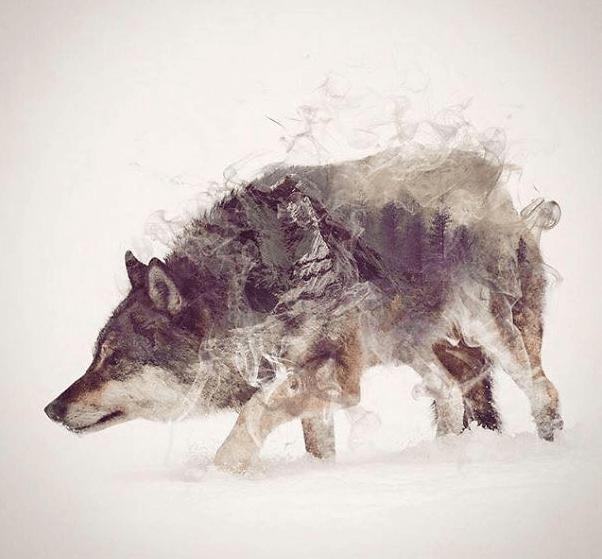 тотемное животное волк