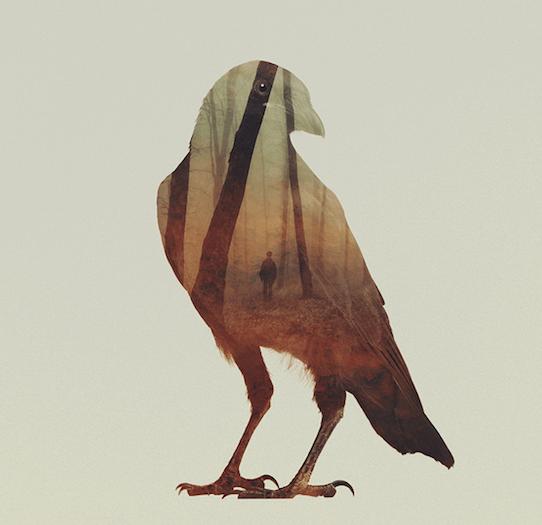 тотемное животное ворон