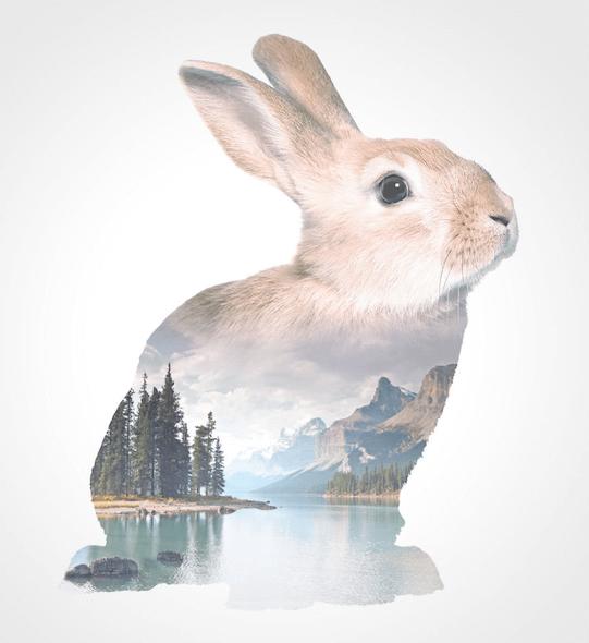 тотемное животное кролик