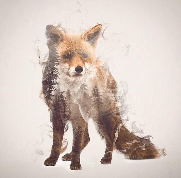 тотемное животное лиса