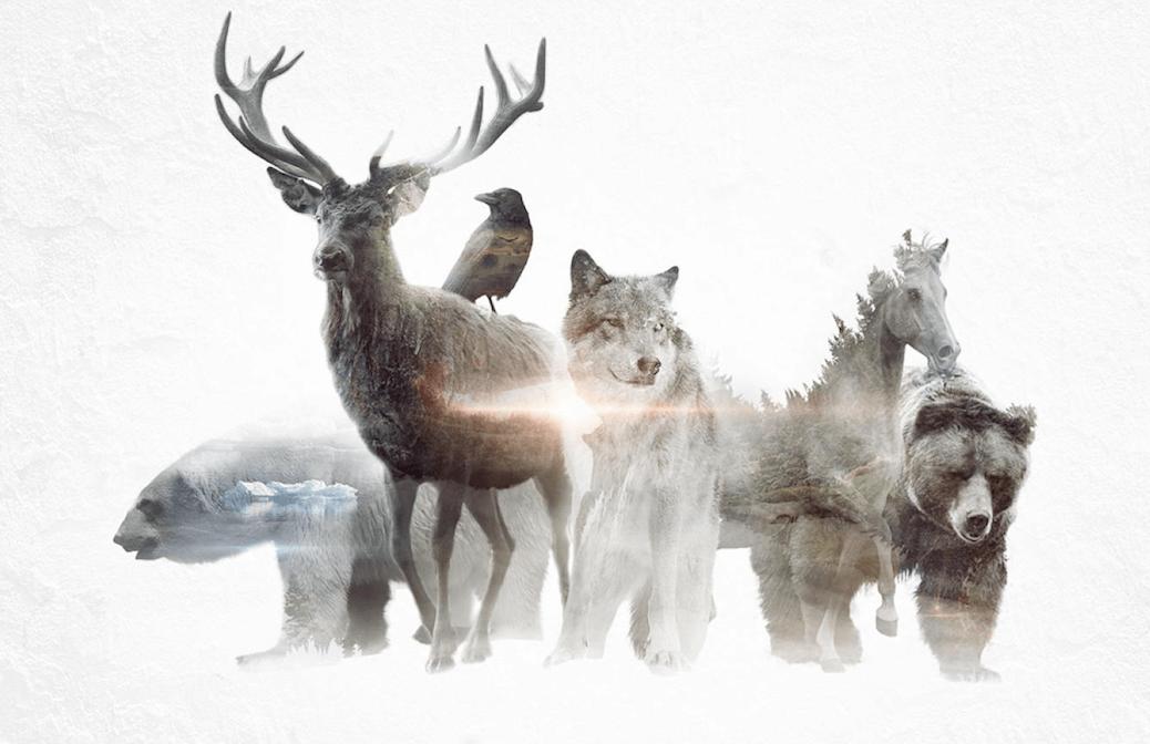 животные силы тотем проводник духа